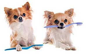 dogs with toothbrushes